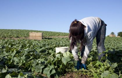 2009_ChildFarmWorkers_001